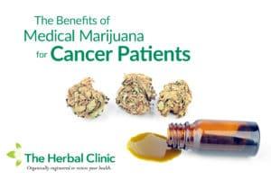 cannabis for cancer florida